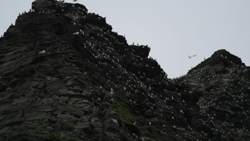 Vestveggen av koller har en stor koloni av hekkende fugl. Mest krykjer, polarmåke, teist, polarlomvi og alkekonge hekker her.