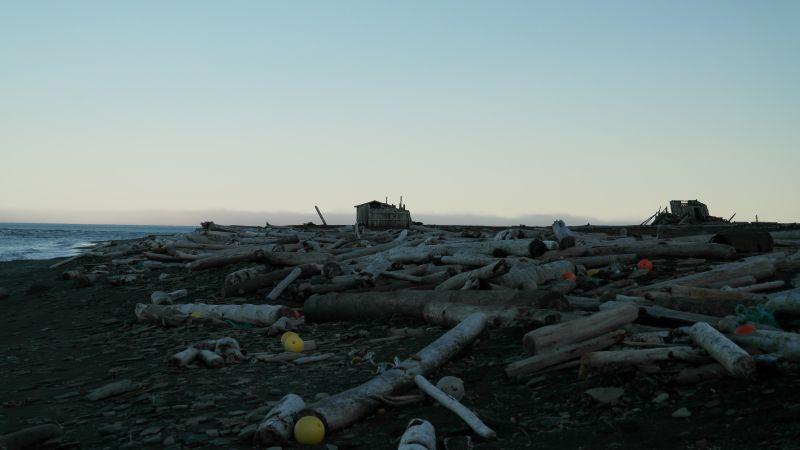 Mye drivtømmer ved hyttene i Russevika.