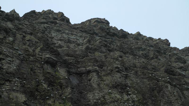 Under Trollkallen er det mange fugler som hekker om sommeren.