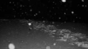 Isbjørnspor 18.12.14 - 3