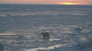Isbjørn på isen bryr seg lite om at sola er tilbake. Foto: Bjørn Ove Finseth