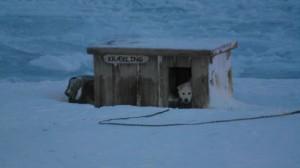 Krækling koser seg i huset sitt  . Foto: Bjørn Ove Finseth