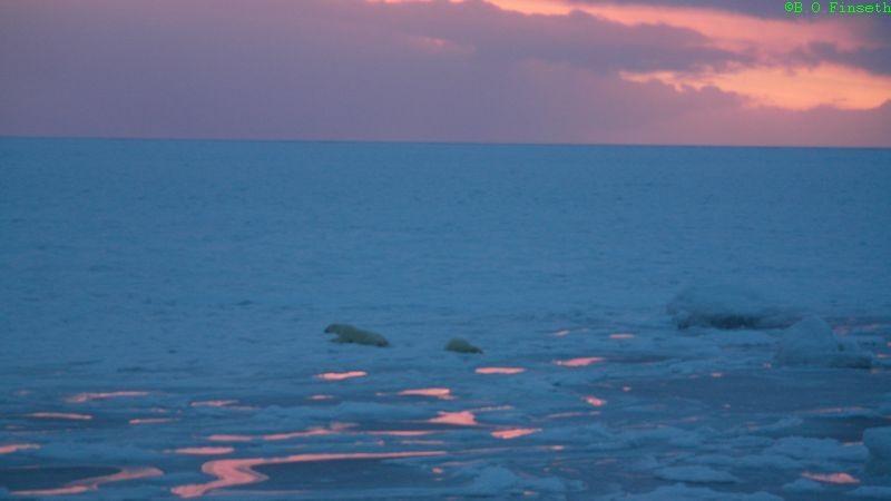 Både binne og unge har gått gjennom isen.
