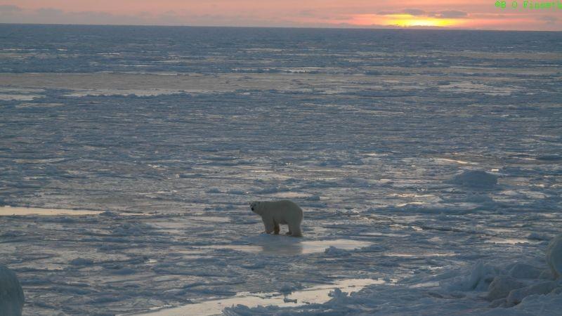 Så ruslet den ut på isen på årets første soldag 10. februar