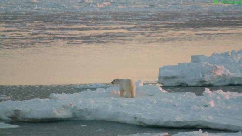 Isen var gått i oppløsning men denne karen var ikke urolig for det.