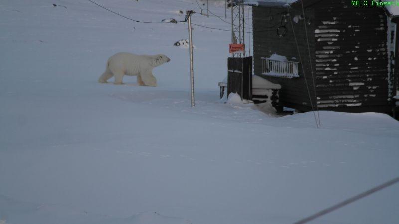 Isbjørnen er ved reservestasjonen.