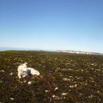 Bølge på Kollerfjellet. Kunne se Edgeøya herfra, noe uklart på bildet.