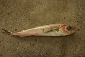 Underlig fisk2