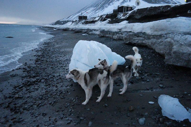 Voronin, Smith og Bølge inspiserer en stor isklump fra en eller annen isbre på Svalbard, som er slengt opp på stranda.